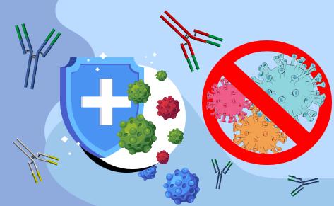 Antibody Technology