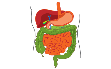 Gastrointestinal tract and Hepatobiliary system (including probiotics)